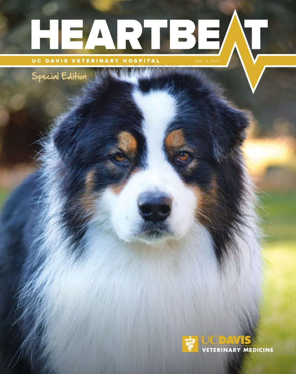 Heartbeat Heartbeat is a bi-monthly newsletter of the UC Davis Veterinary Medical Teaching Hospital. View the latest issues.